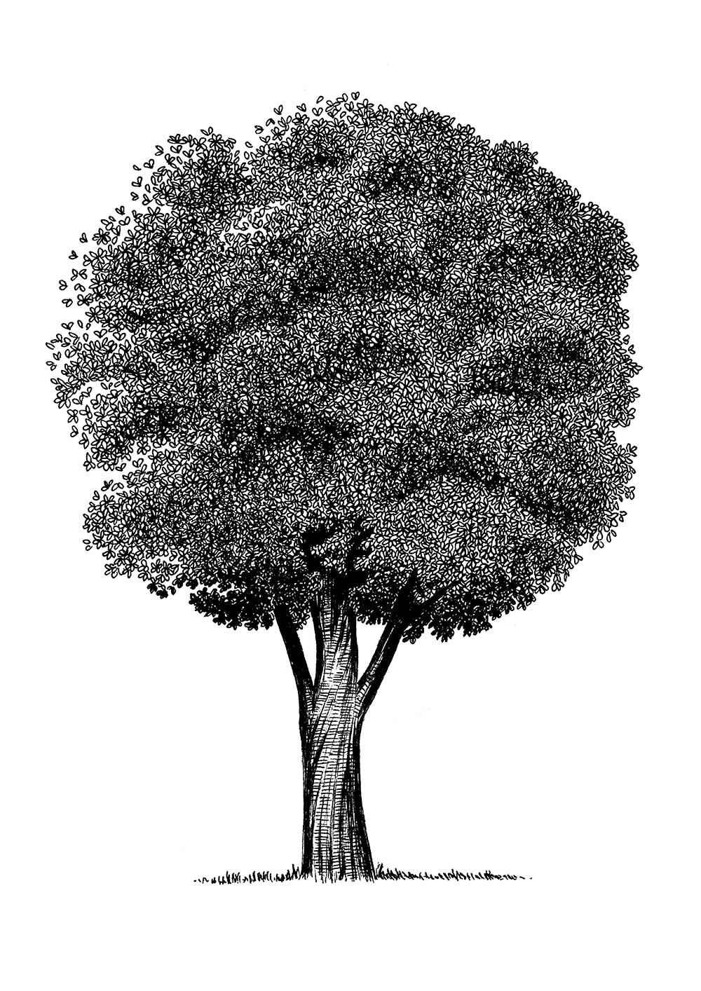 pen and ink illustration of a tree with butterflies by sally barnett