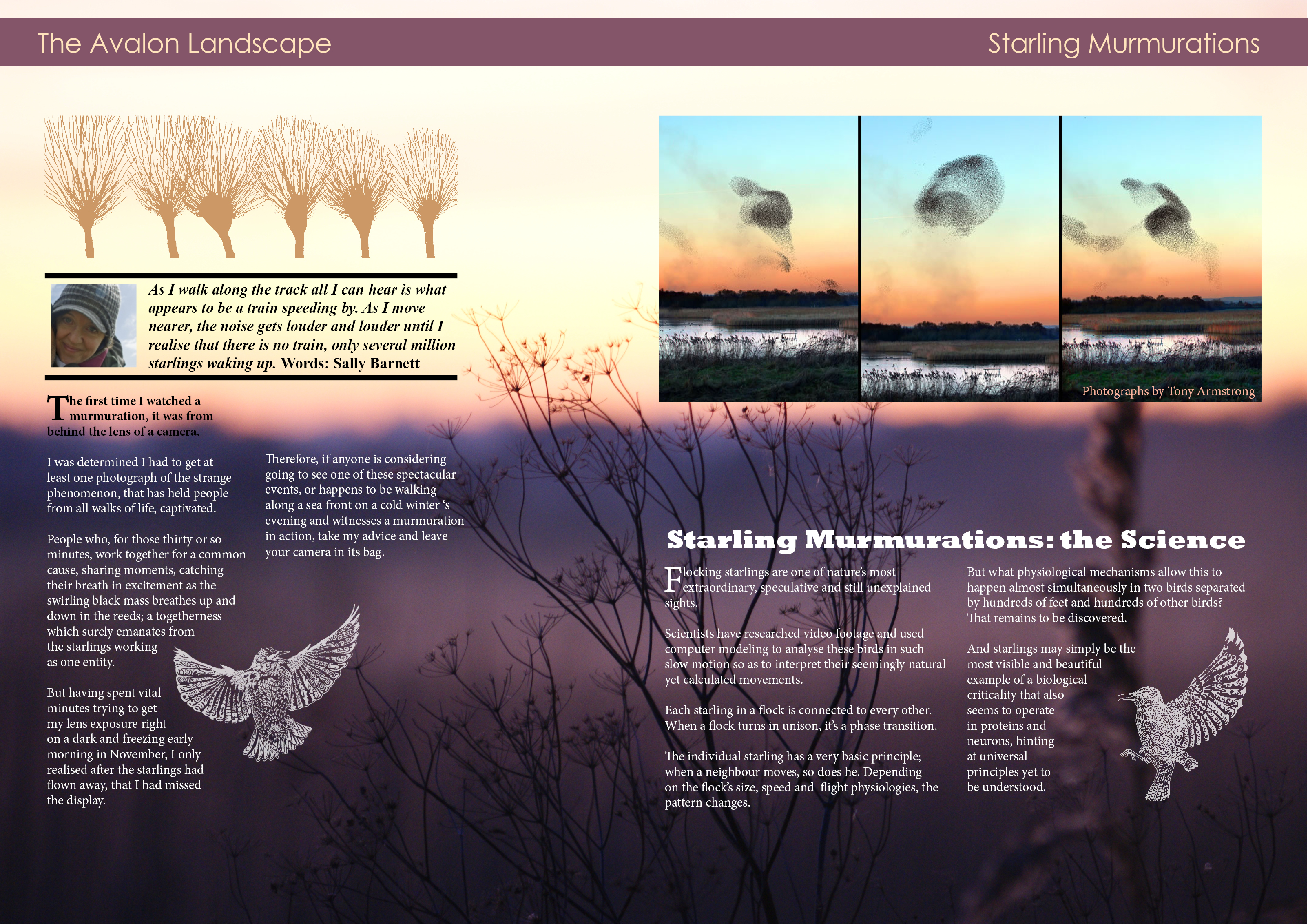 sally barnett photography of somerset levels, starling mormurations article for interactive magazine